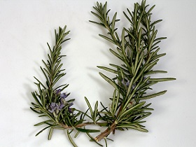 Photo of Rosemary Leaves